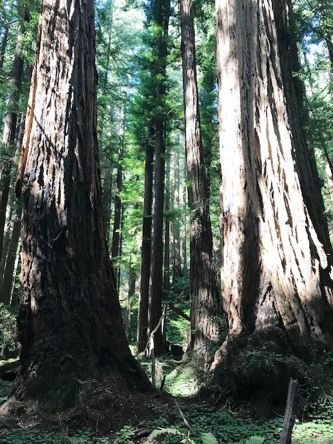 Muir Woods 2 07Jul18